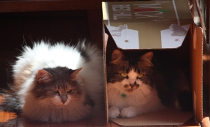 Misty next to a box with Lily in it